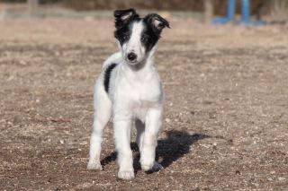 Apollo front cute